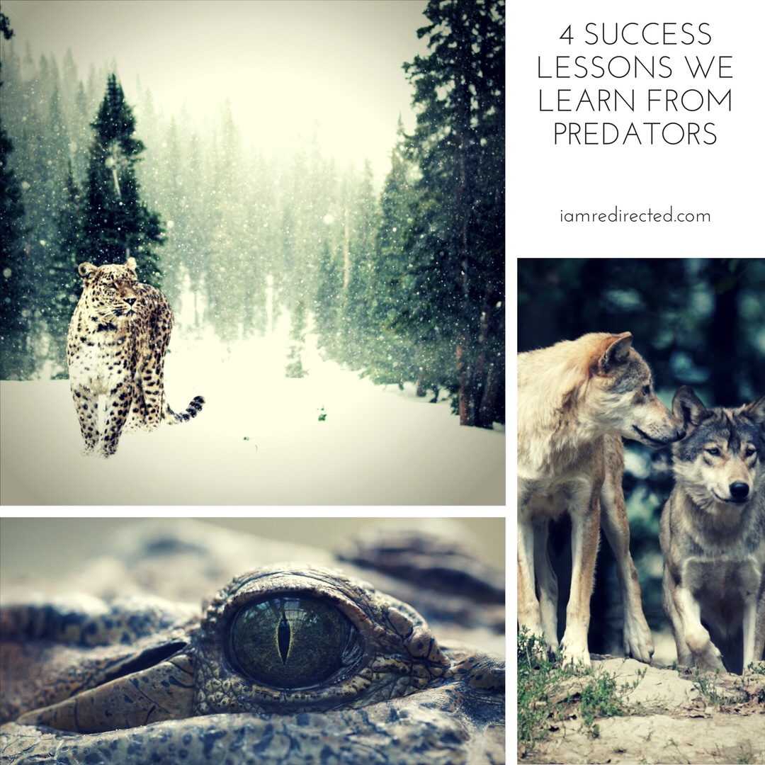 4 Success Lessons We Learn From Predators